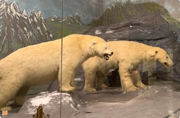 Μουσείο ζωολογίας ΕΚΠΑ